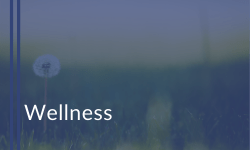 Wellness courses