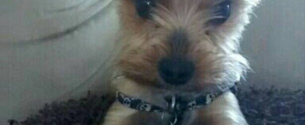 2lb Yorkie Beats to Death with a Pruning Shears