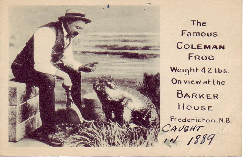 Vintage postcard featuring Fred Coleman and his amazing frog