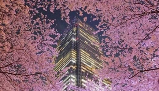 東京ミッドタウンの2018桜ライトアップの時間はいつまで?写真撮影のおすすめスポットは?