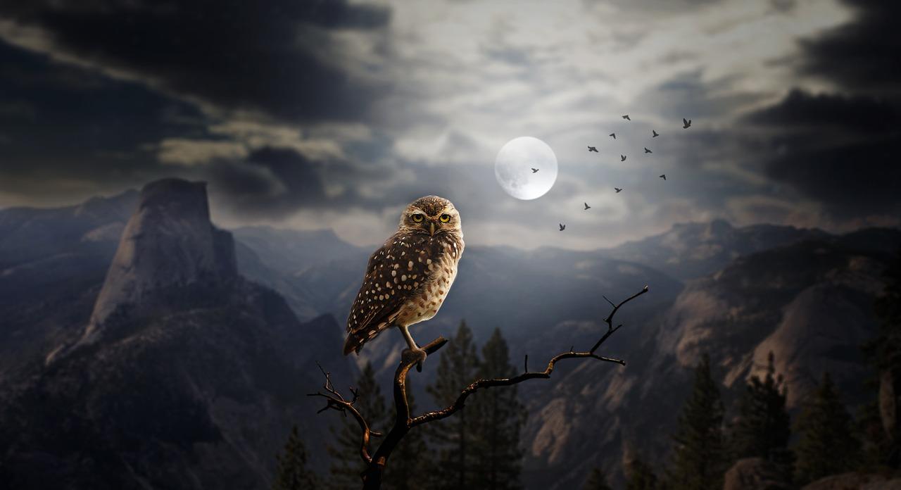 知恵の象徴に、フクロウが使われる理由が衝撃的!