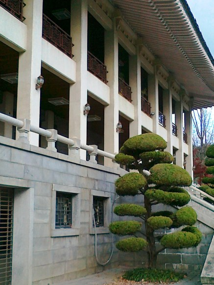 Pohon unik di komplek Culinary School of Korea