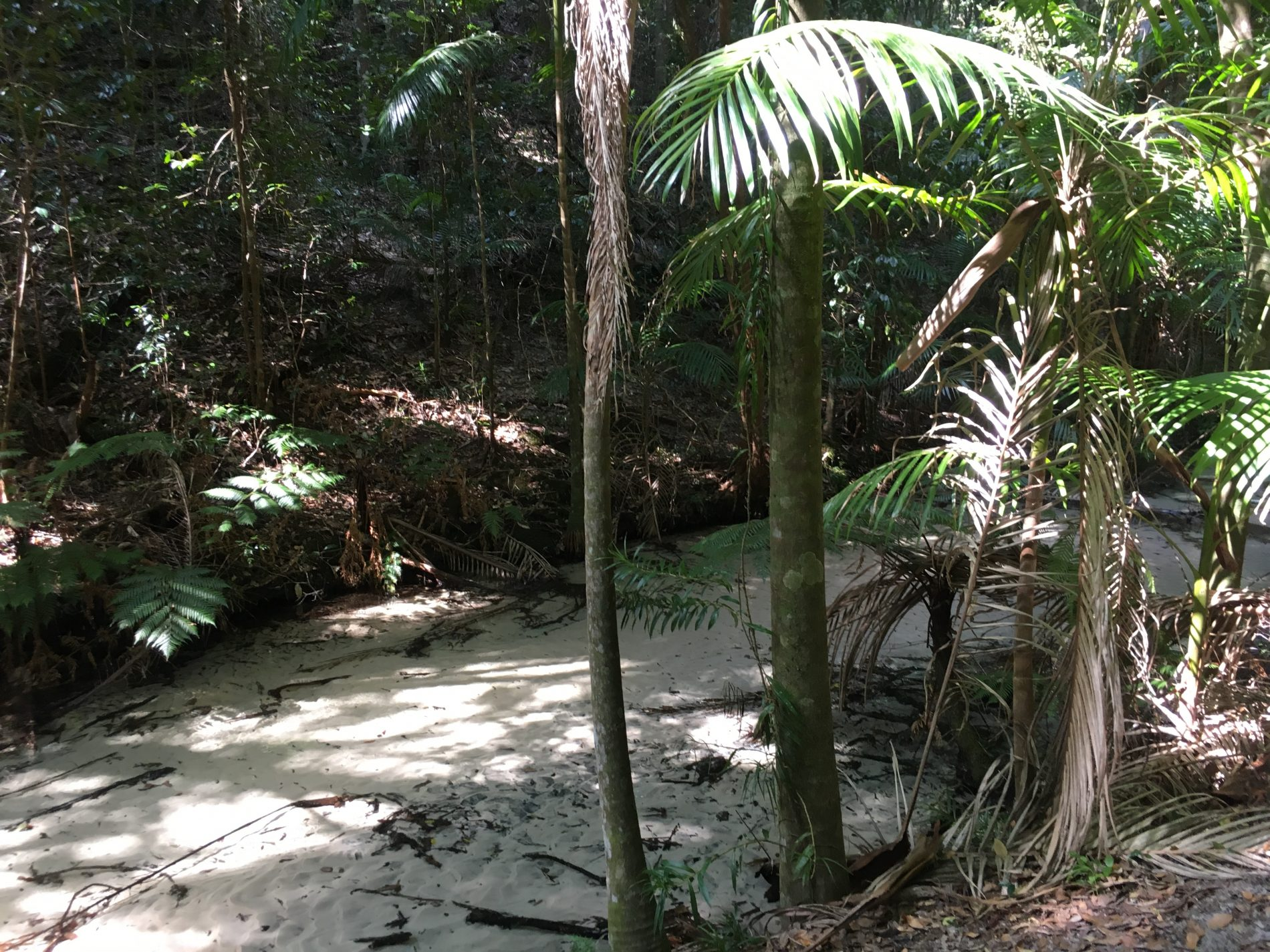 Fraser Island, General Camp, Rainforest Walk