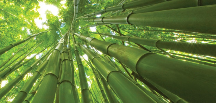 the amazing parable of the chinese bamboo tree and philosophy of