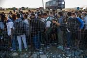 Тысячи мигрантов на дороге обворовывают водителей ( Видео)
