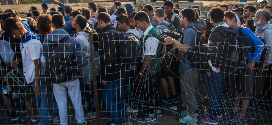 новости европы,мигранты воруют у европейцев,беспредел мигрантов,свежие новости