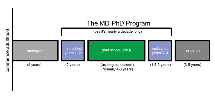 What is MD-PhD training (and why am I still a student?)