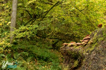 Hareshaw Linn walking trail