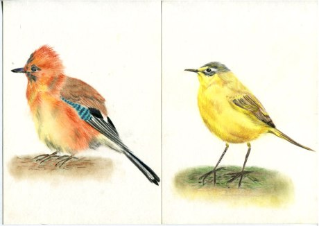 birds_illustration-by-youdesginme