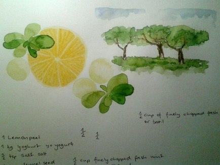 illustration_by_youdesignme-yogurt-basil-balls-wip06