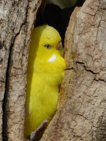 youdesignme_bird