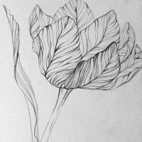 Tulips***