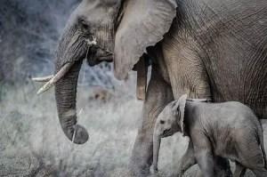 Elephant animal that only eats plants