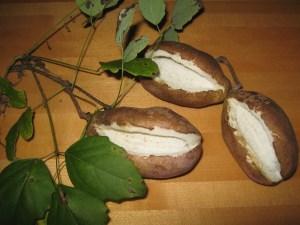 Akebi Fruits