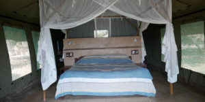 flatdogs camp tent zambia