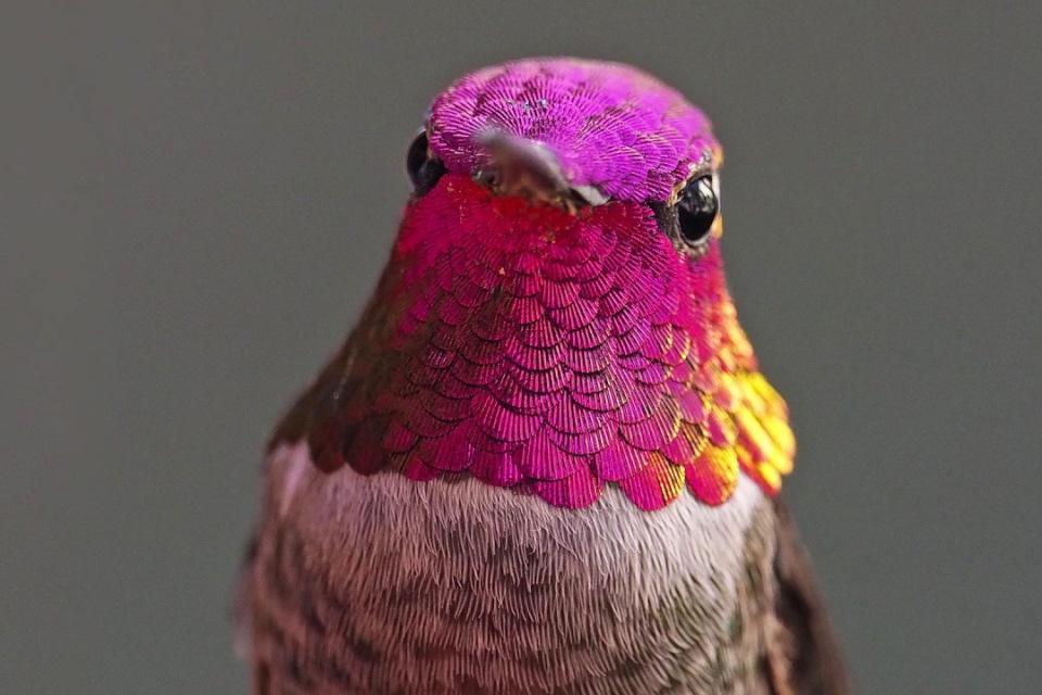 Revue de blogs et réseaux : colibris, hypersensibilité et être chti
