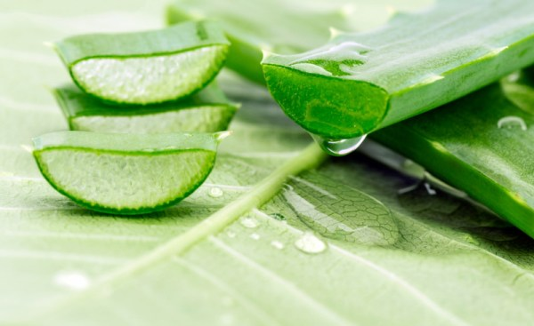 aloe vera sunburn treatment