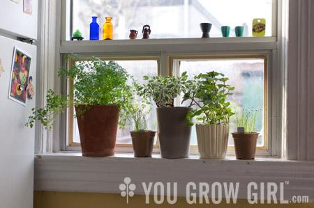 Growing Herbs and Edible Flowers