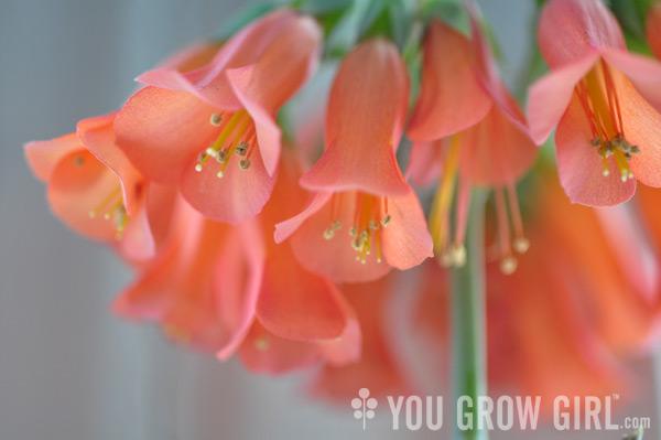 You grow girl chandelier plant aloadofball Choice Image