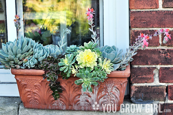 You grow girl a window box of succulents Can succulents grow outside