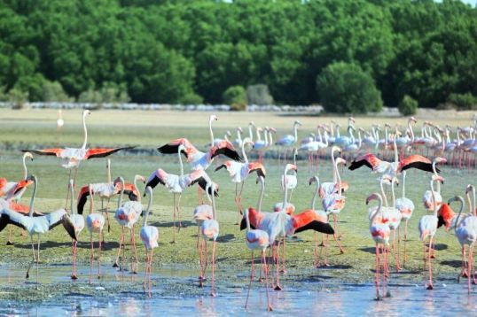 Ras Al Khor Wildlife Sanctuary travel guidebook –must visit attractions in  Dubai – Ras Al Khor Wildlife Sanctuary nearby recommendation – Trip.com