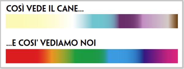 percezione-dei-colori