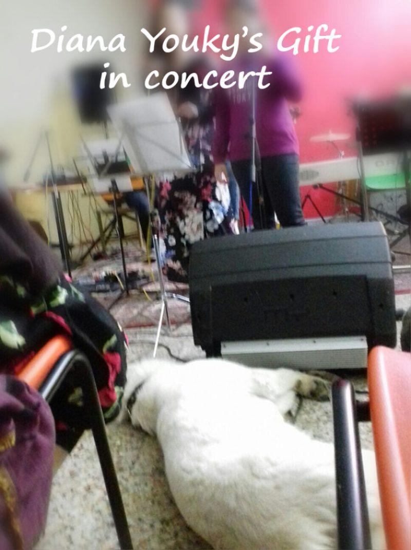Diana Youky's Gift Pastore Svizzero in concert