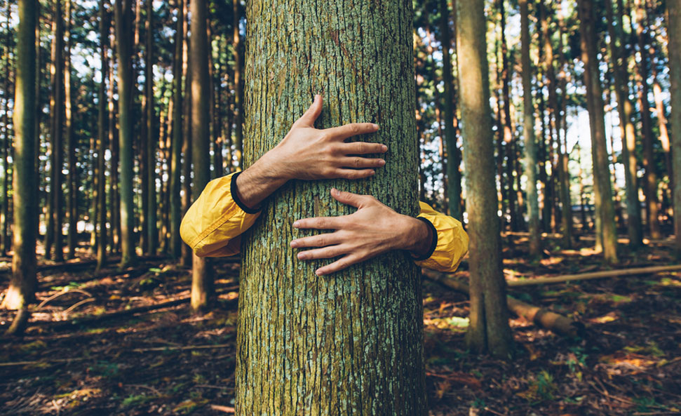 """""""their quality of life is greatly prejudiced,. 5 Steps To Help Stop Deforestation Learn About You Can Do For The Planet"""