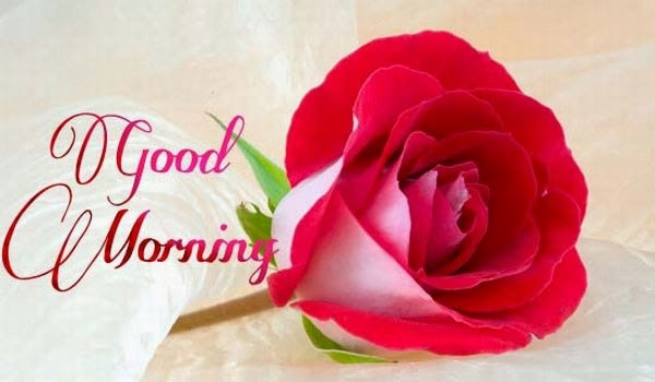 Good Morning Images Photos Wallpapers Greetings Wishes