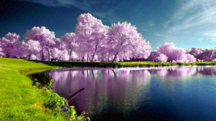 Spring Nature HD Wallpaper For Desktop Background