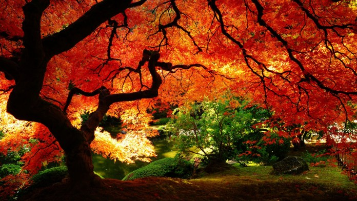 Autumn Nature HD Wallpaper For Desktop