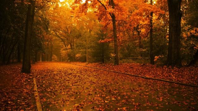 Autumn Nature HD Wallpaper