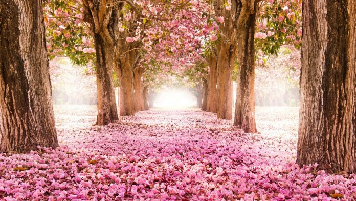 Spring Nature HD Wallpaper For PC
