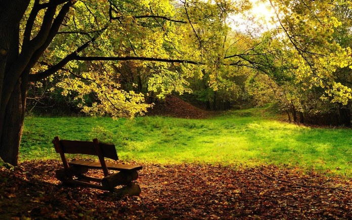 Autumn Nature HD Wallpaper For Mobile