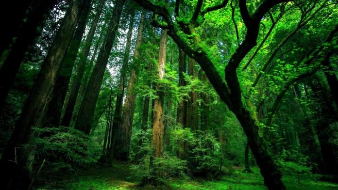 Forest HD Wallpaper For WideScreen