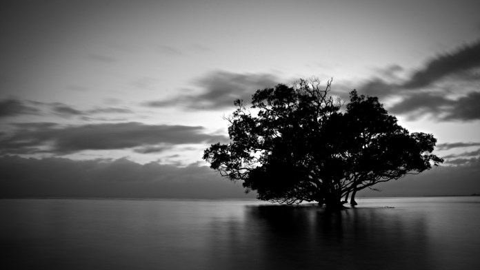 Black And White Nature HD Wallpaper For Mac