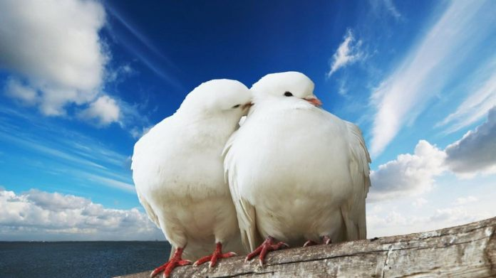 cute love bird pictures