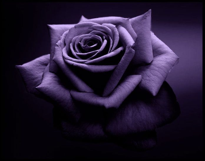 black rose for breakup images