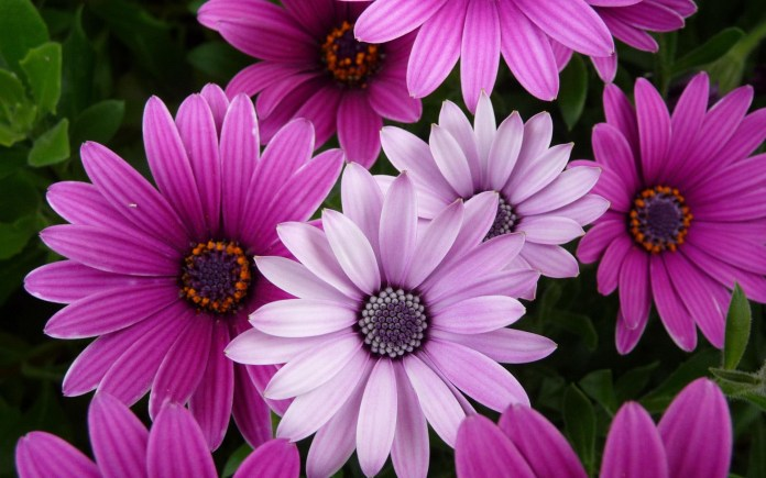 beautiful flowers wallpapers free download