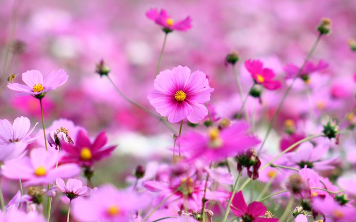beautiful flowers wallpapers for windows 7