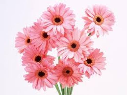 cute pink flowers wallpapers for bed room