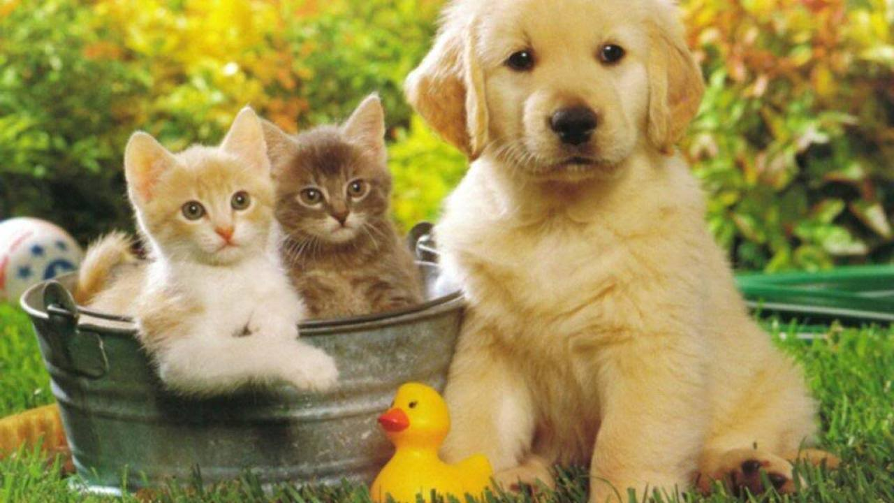 Cute Cats Dogs Wallpapers Images Free Download For Desktop Background Youme And Trends