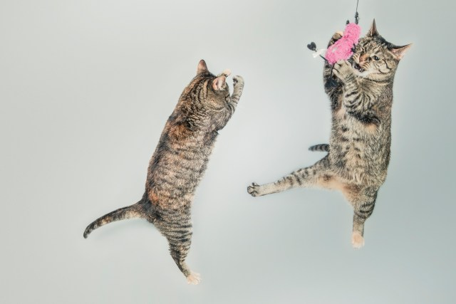 cat dancing wallpapers hd