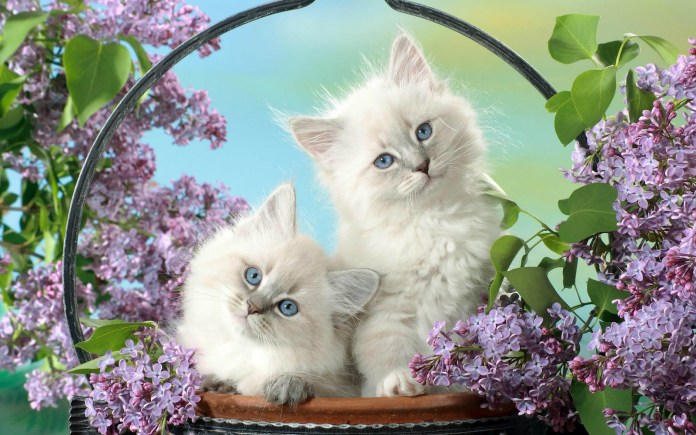 cute cat wallpapers latest collection
