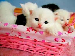 cute cat wallpapers free download
