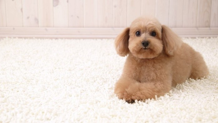 cute dog hd wallpapers free