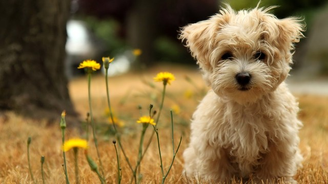 dog desktop wallpapers hd