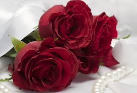 rose day cute images