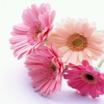 20 Beautiful Flowers You Might Fall In Love With !