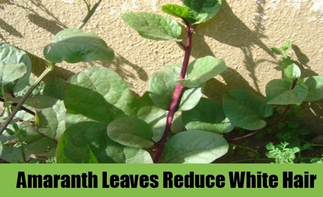 amaranth To Get Rid Of White Hairs Naturally